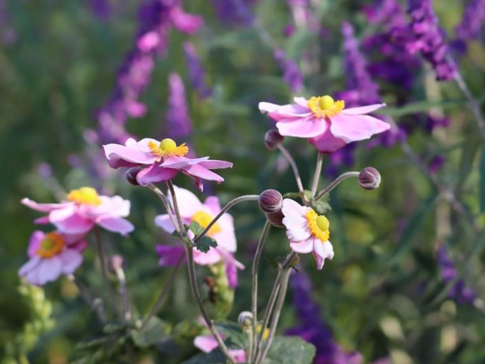Tips para tener el jardín que querés